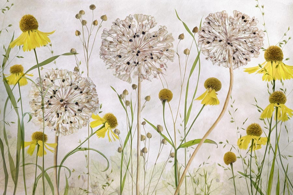 Alliums and Heleniums Mural Wallpaper Additional Thumbnail