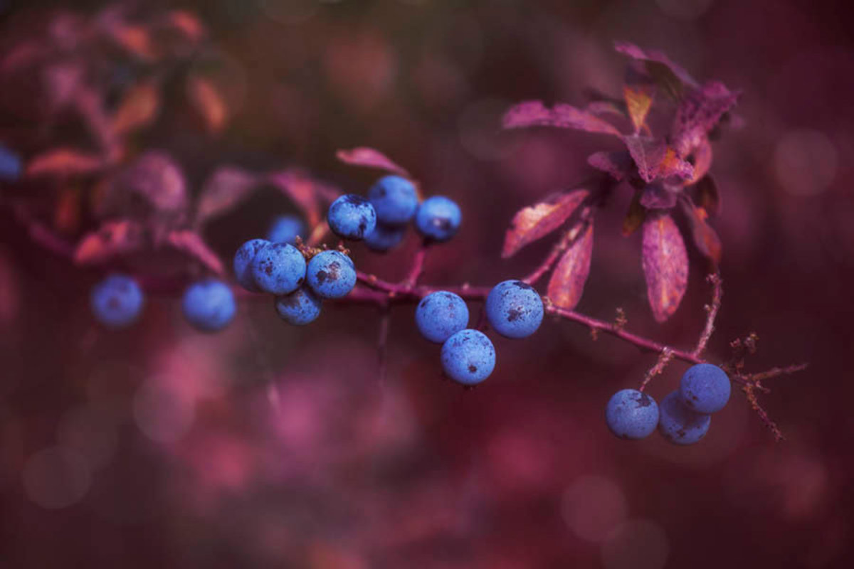 Image for Autumn Berries - Rich Wall Mural