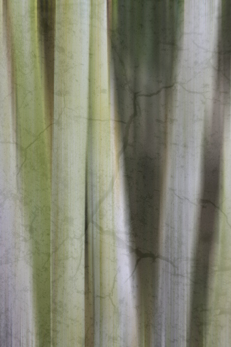 Image for Bamboo Element 2
