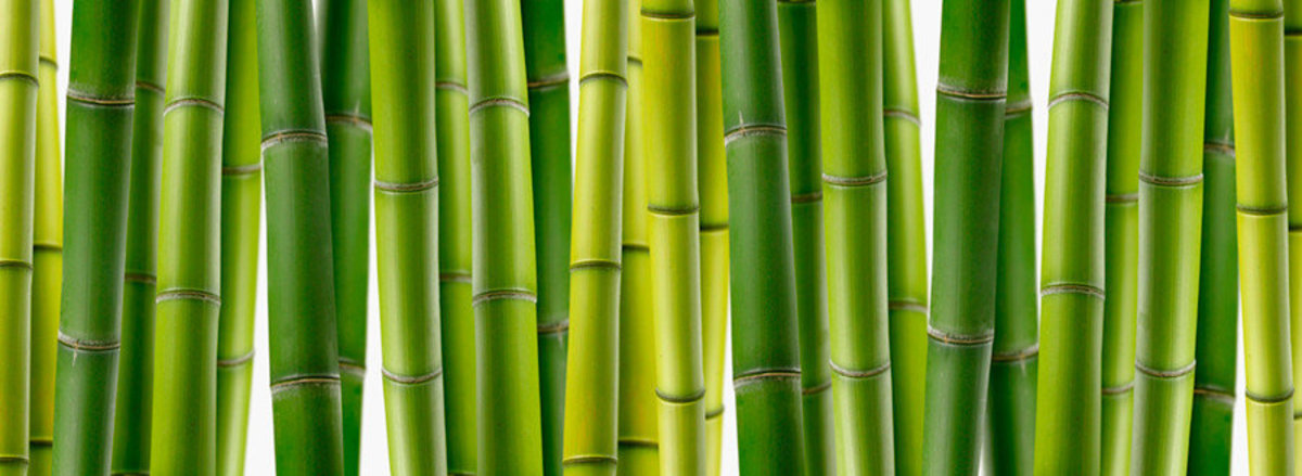 Image for Bamboo-Panoramic
