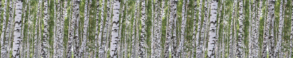 Image for Birchwood Forest - Panoramic