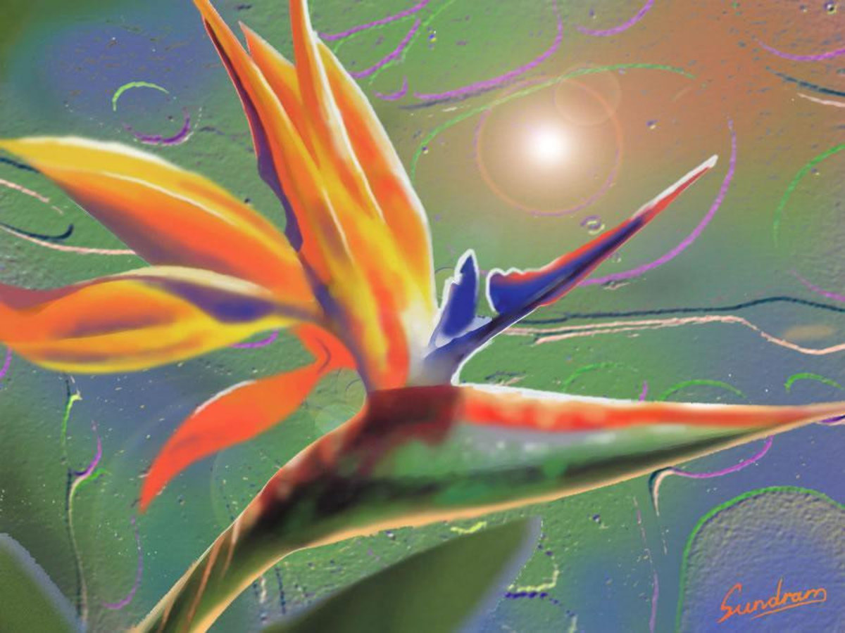 Image for Bird Of Paradise