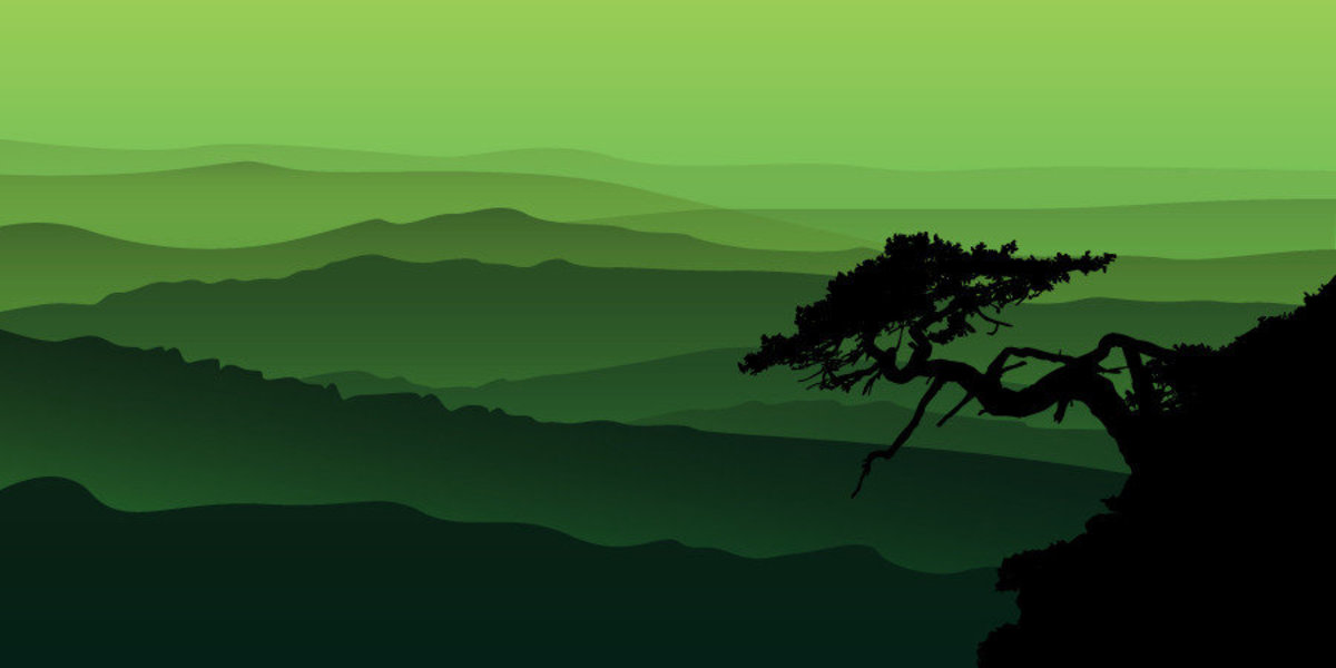 Image for Bonsai Tree With Mountain View