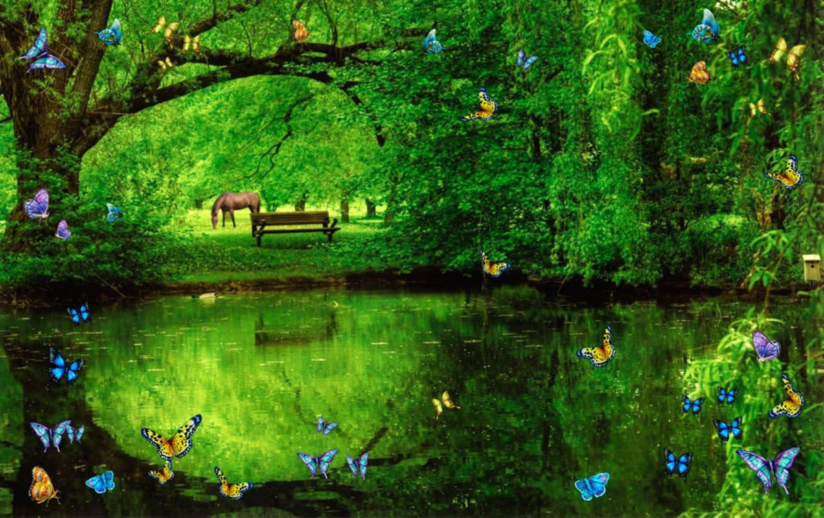 Butterfly Pond With A Horse Sample