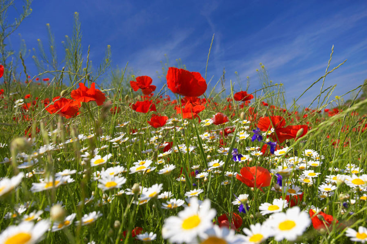 Colorful meadow with flowers and a blue sky Sample