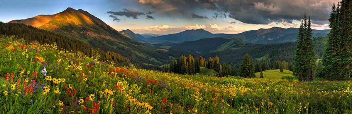 Crested Butte Wildflowers Wall Mural Sample