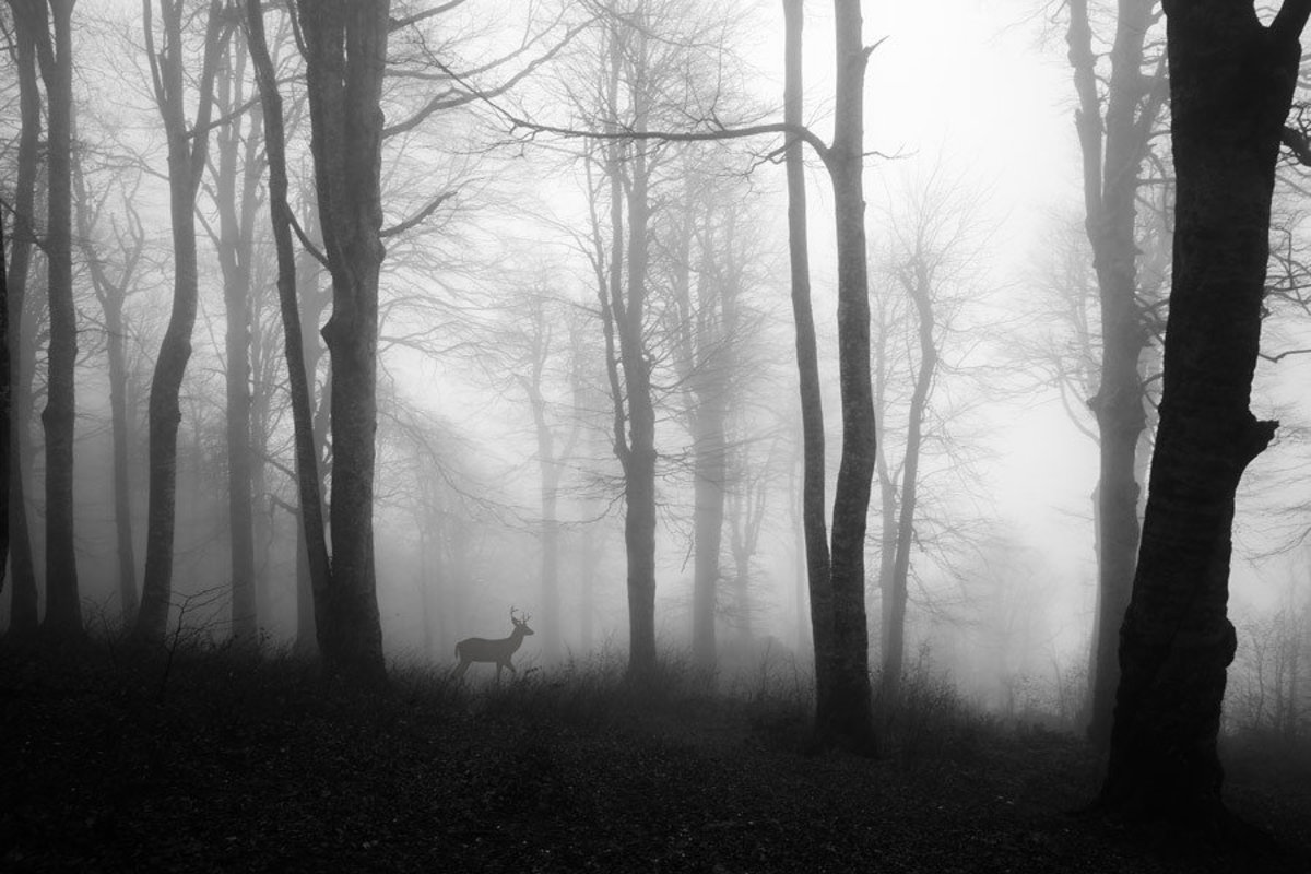 Deer Strolling Through Foggy Forest Additional Thumbnail