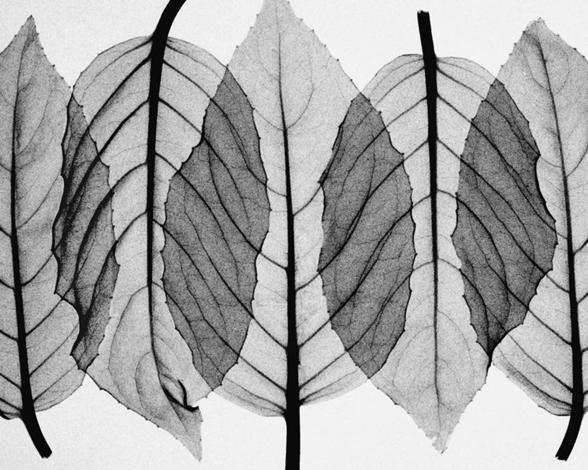 Fuscia Leaves-Black & White Wall Mural Sample