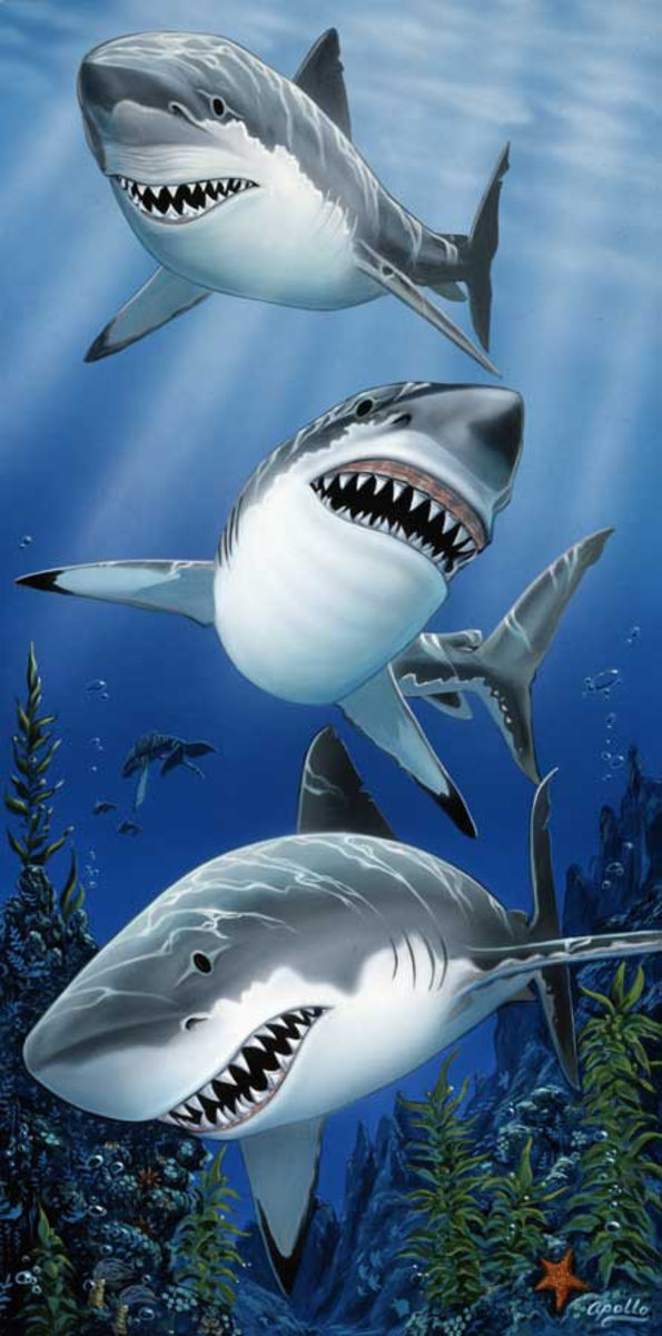 Great White Trio Mural Wallpaper Sample