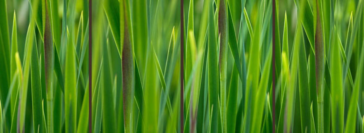 Image for Green Grass Gradient