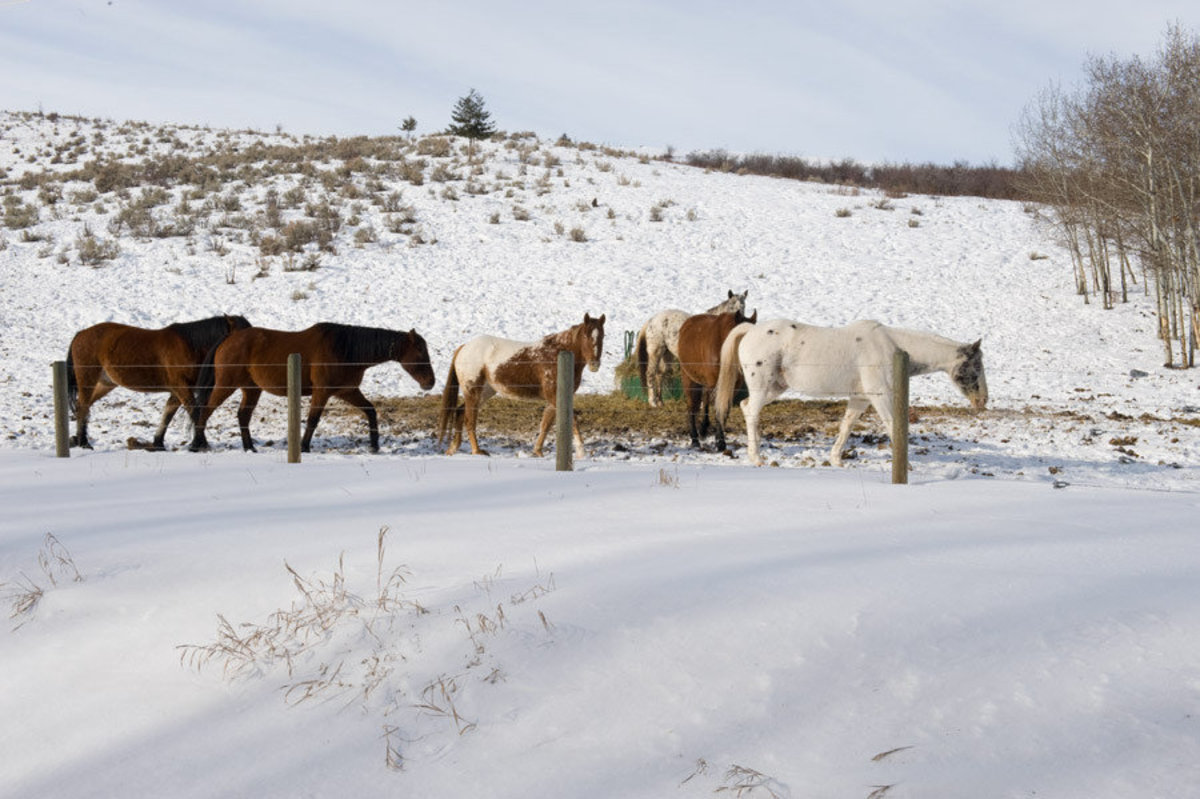 Horses In Field Wallpaper Mural Additional Thumbnail
