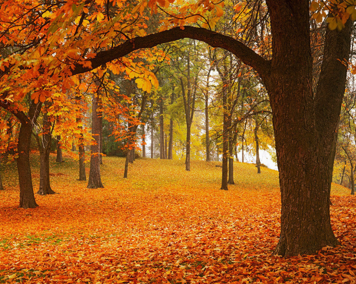 Fall nature wallpaper of Manito Park in Autumn Sample