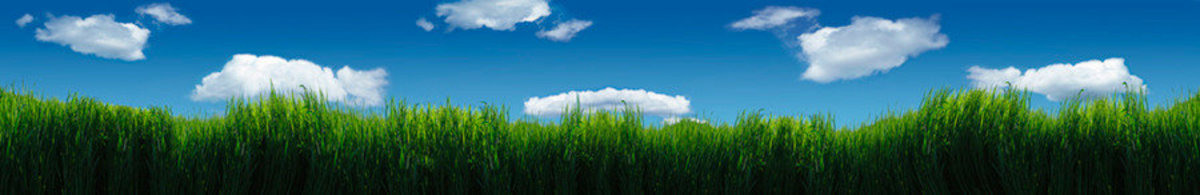 Melba Grass And Clouds Wall Mural Additional Thumbnail
