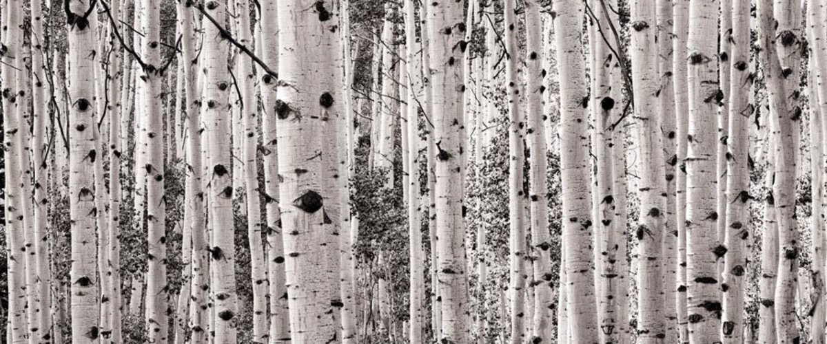 Image for Monochrome Aspen Panorama