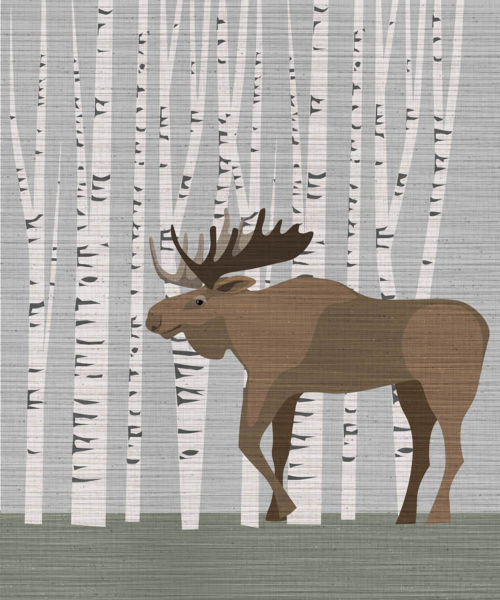 Moose in Birch Tree Forest Wallpaper Mural