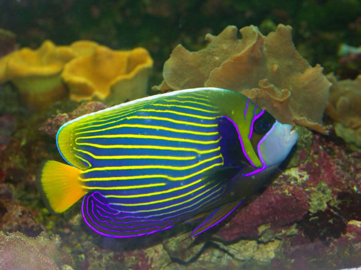 Multicolored Angelfish Mural Wallpaper Additional Thumbnail