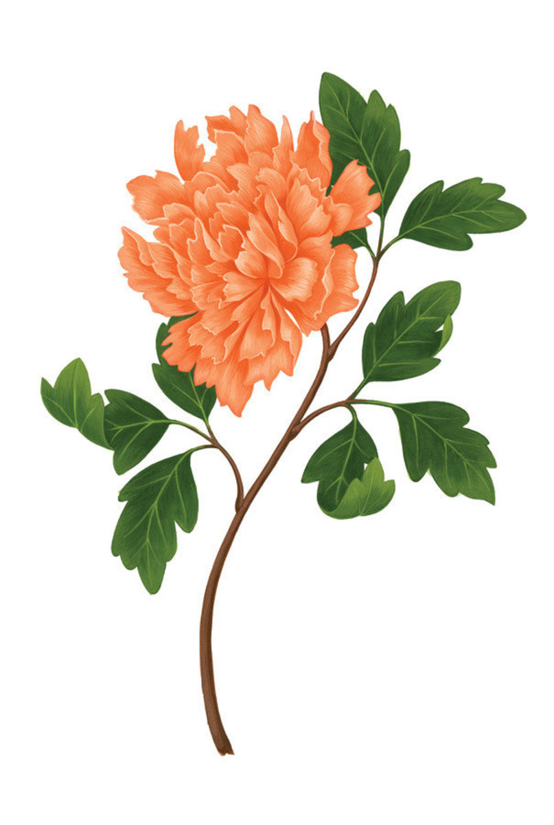 Orange Peony (Beare) Mural Wallpaper