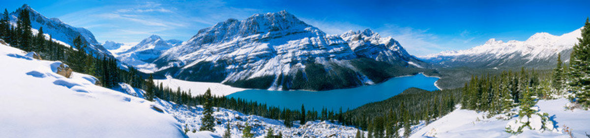 Image for Peyto Lake In The Canadian Rockies