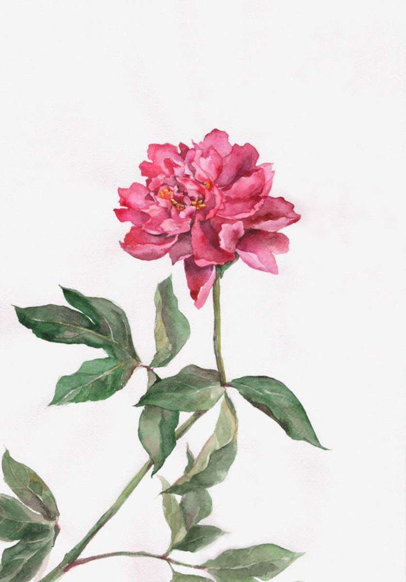 Image for Pink Peony Wall Mural