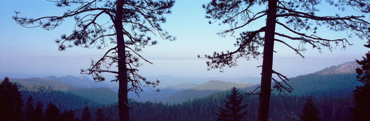 Image for Silhouetted Pines, Sequoia National Park, CA