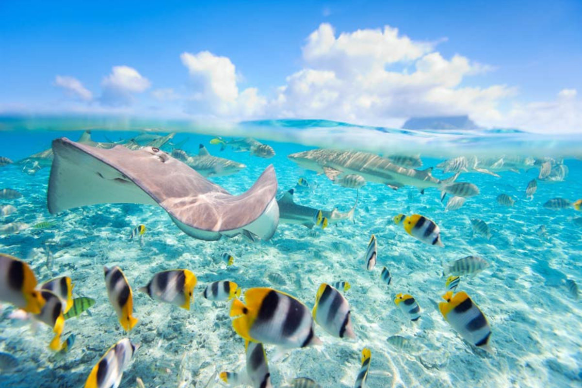 Stingray and Friends Mural Wallpaper Additional Thumbnail