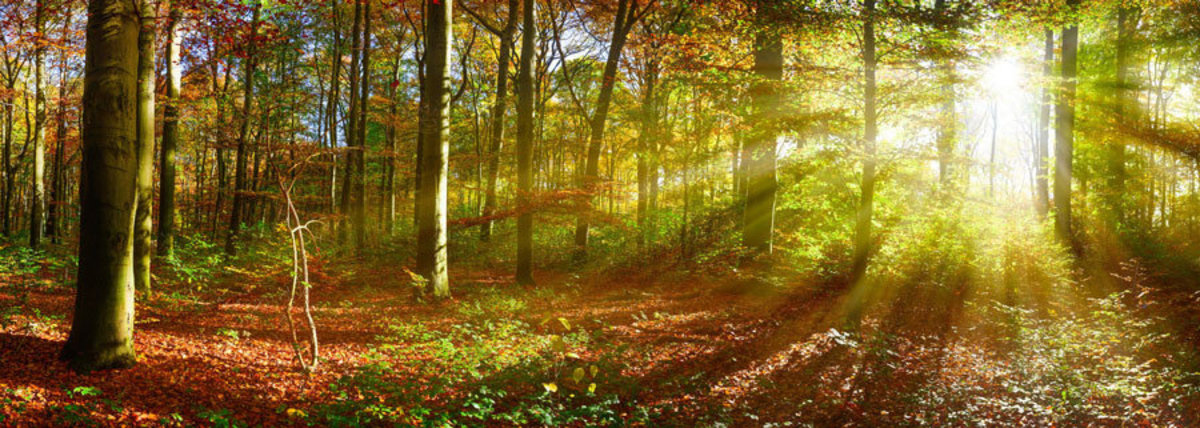 Bright sunlight illuminates an autumn forest as it peeks through tree branches Additional Thumbnail
