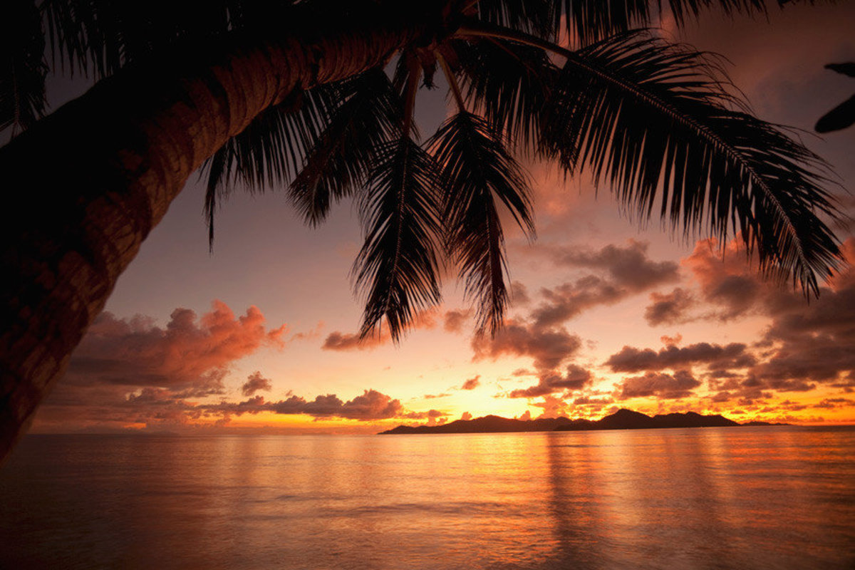 Sunset With Palm Tree Mural Wallpaper Additional Thumbnail