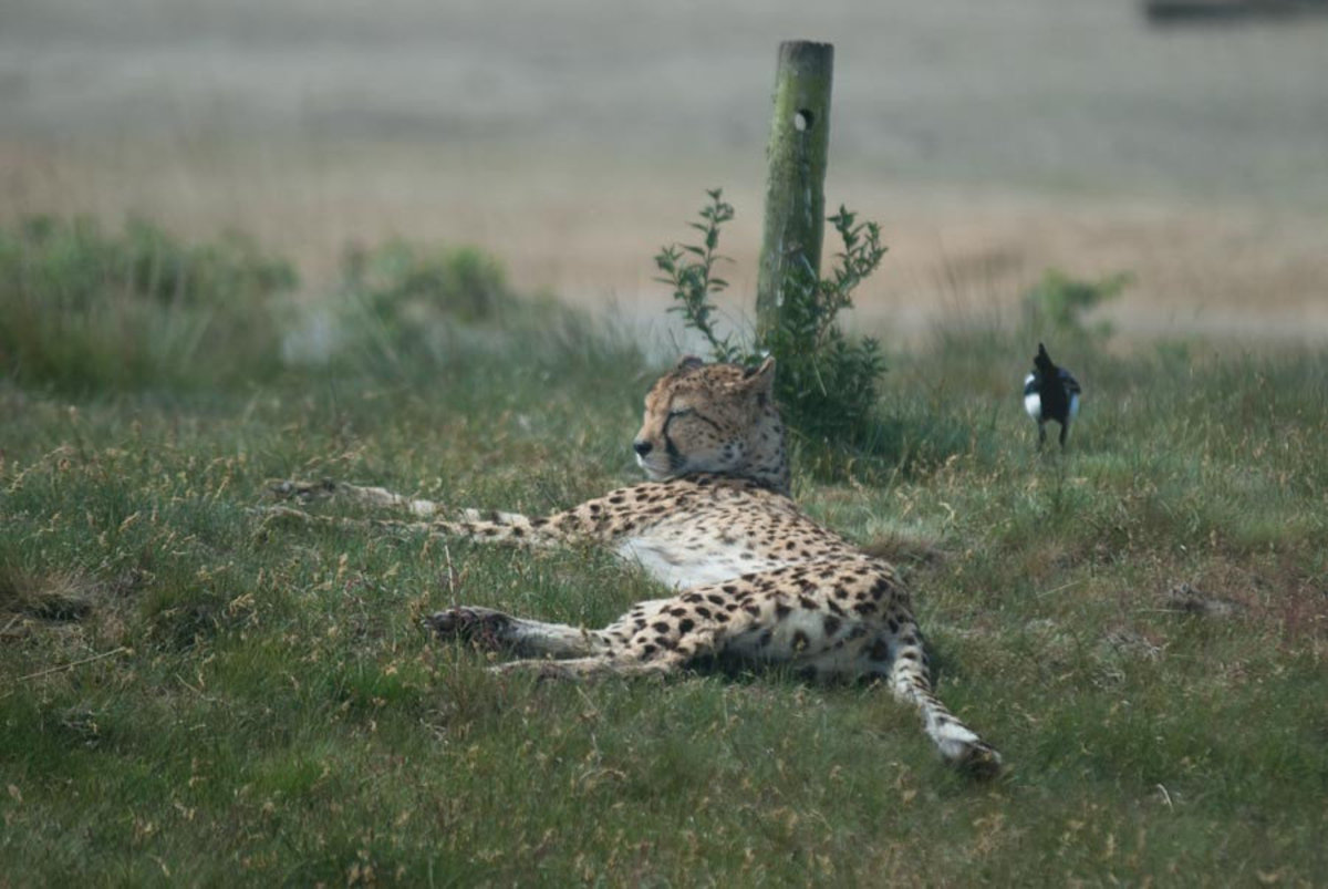 Image for The Bird and the Big Cat