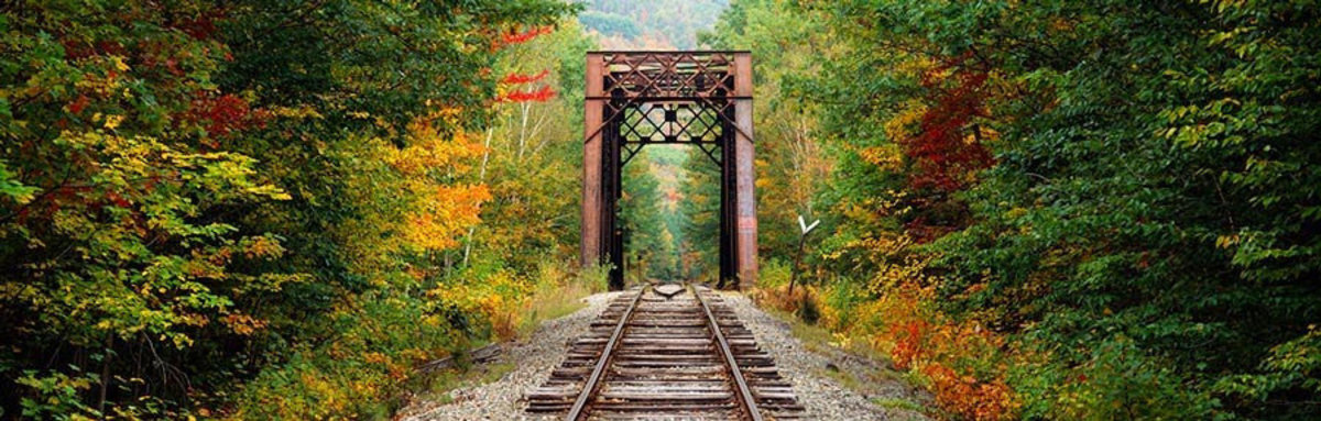 Train Tracks Passing Through A Forest Wallpaper Mural Additional Thumbnail