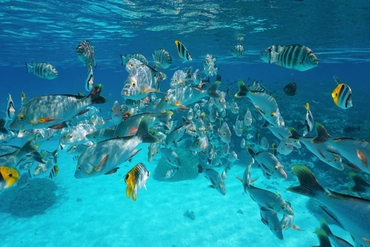 Tropical Fish Underwater Mural Wallpaper