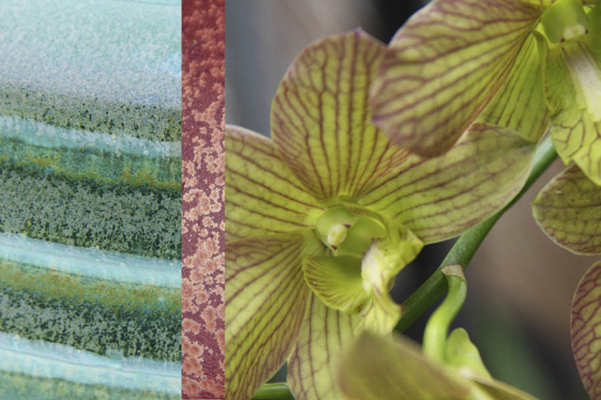 Image for Tropical Orchid 2