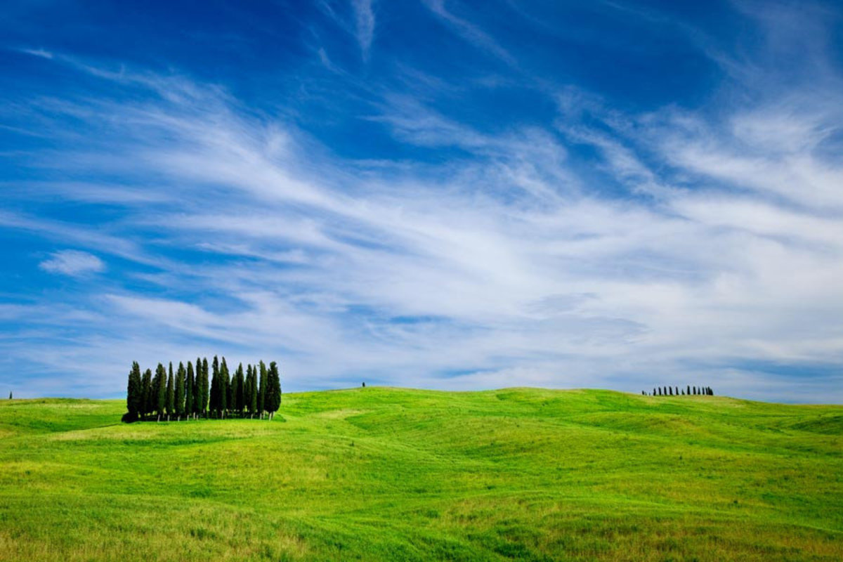 Image for Tuscany Cypress